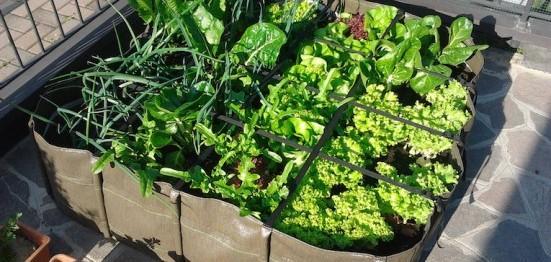 Le 10 regole per avere l 39 orto perfetto kikakitchen - Sacchi di terra per giardino ...